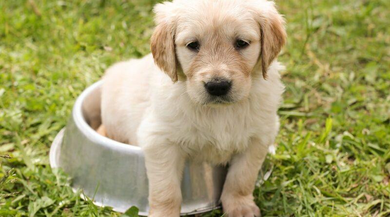 Acana kutyatáp